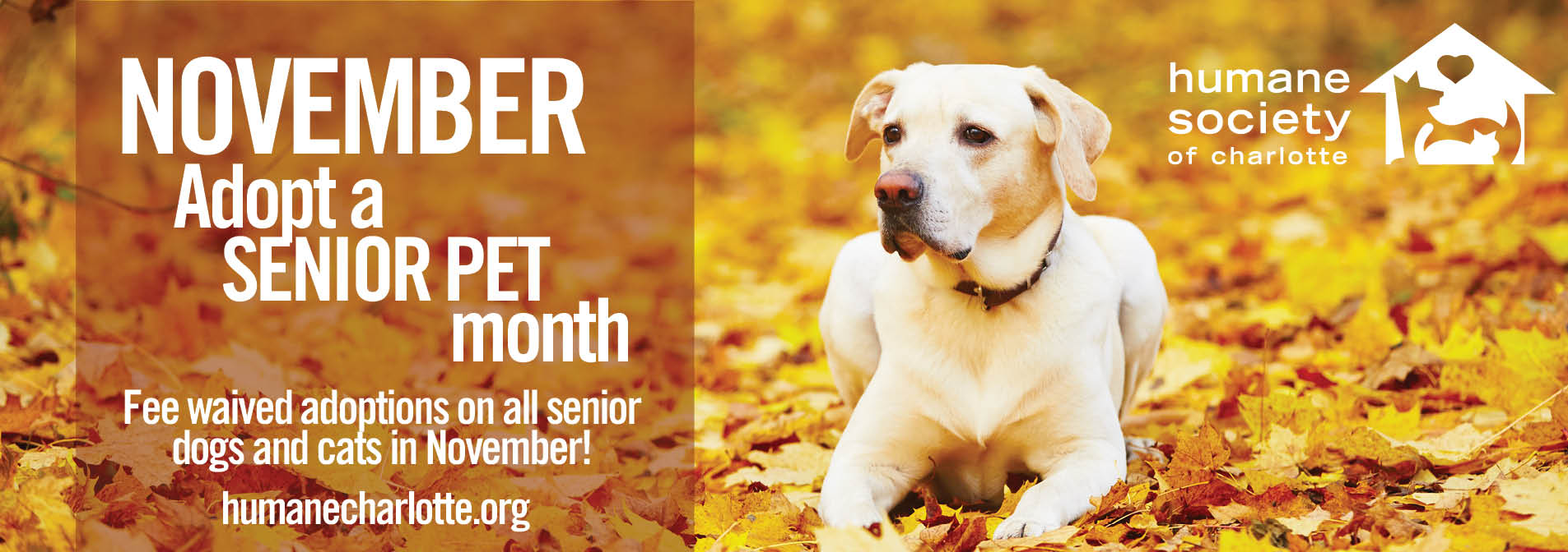 the humane society of charlotte animal adoptions u0026 shelter