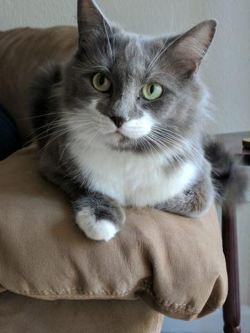 scottish fold kittens for sale ma