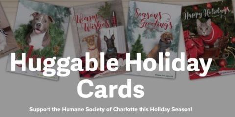 send warm fuzzies to your friends and family this holiday season with huggable holiday cards by the humane society of charlotte and boingo graphics - Humane Society Christmas Cards