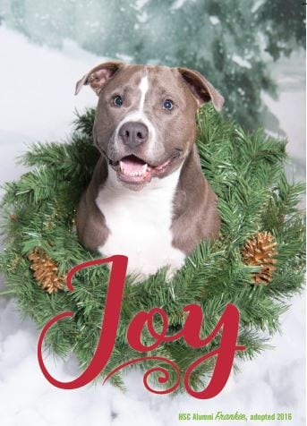 purchase a huggable holiday card pack for 2000 and all proceeds will be donated to support the humane society of charlotte each package of 12 huggable - Humane Society Christmas Cards