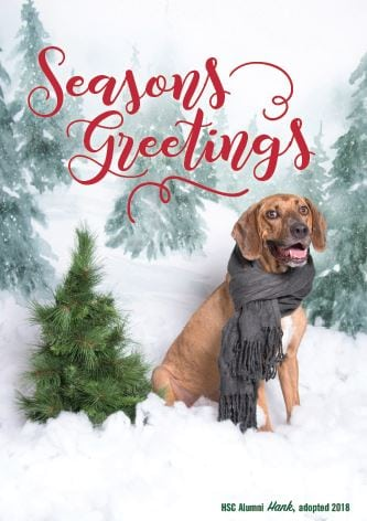 all proceeds will be donated to support the animals here at the humane society of charlotte purchase a huggable holiday card - Humane Society Christmas Cards