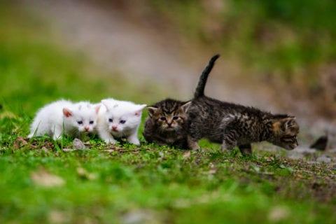 Community CatSNIP - Fall @ Humane Society of Charlotte Spay/Neuter Clinic