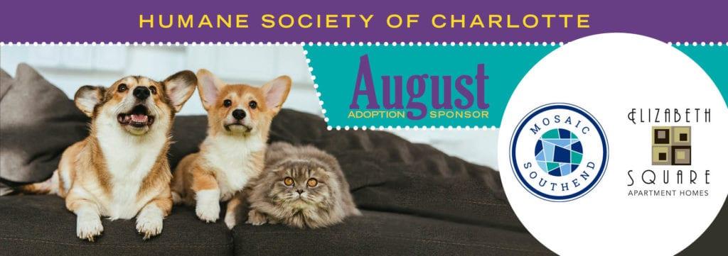 The Humane Society of Charlotte   Animal Adoptions & Shelter